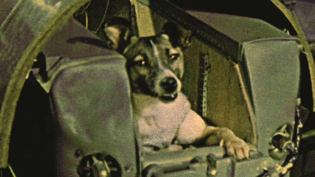"""Laika, la perrita """"cosmonauta"""" que viajó al espacio y dejó la vida en el intento."""